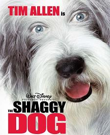 Shaggy Dog.JPG